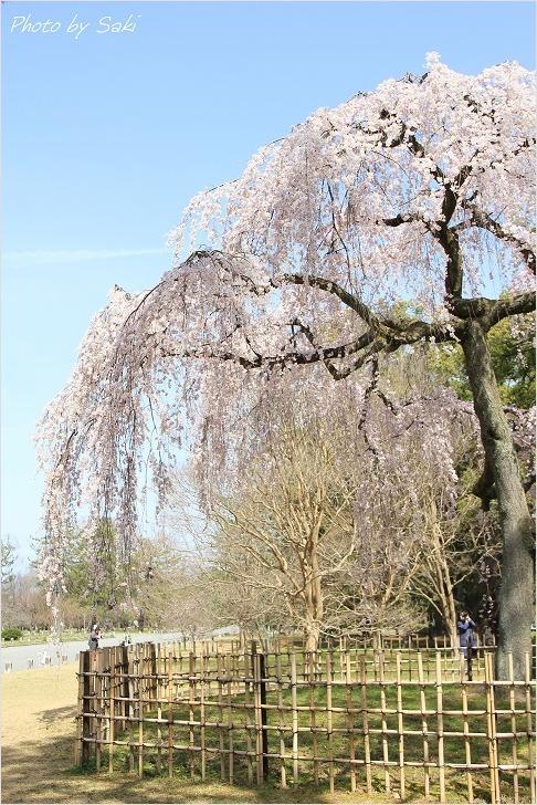 春の日の夢。_b0311208_17193276.jpg