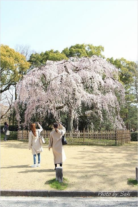 春の日の夢。_b0311208_17194265.jpg