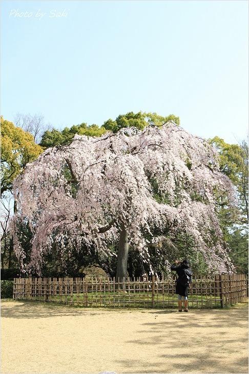 春の日の夢。_b0311208_17195730.jpg