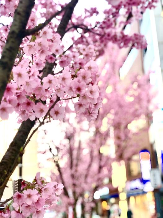 桜咲く_a0037910_17112859.jpg