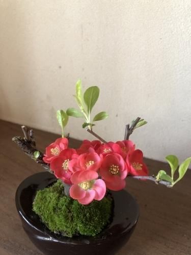 椿から一気に桜の季節に_a0197730_14055723.jpeg