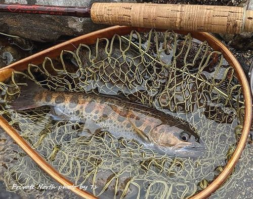 昨日の釣り_d0261148_19584330.jpg