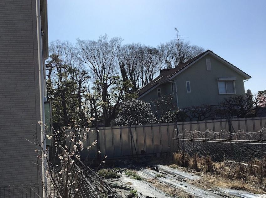 大きな木々が切り倒されて。。。_c0201749_22430354.jpg
