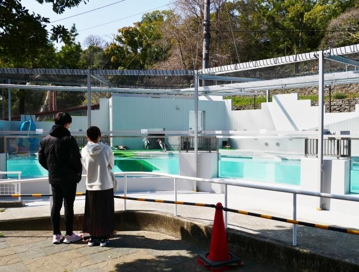 お城の動物園  改装なったペンギン舎  2021-03-21 00:00_b0093754_23132008.jpg