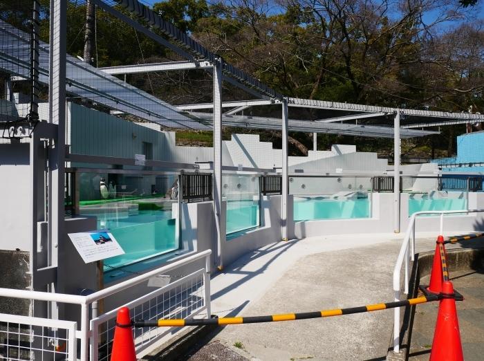 お城の動物園  改装なったペンギン舎  2021-03-21 00:00_b0093754_23133198.jpg