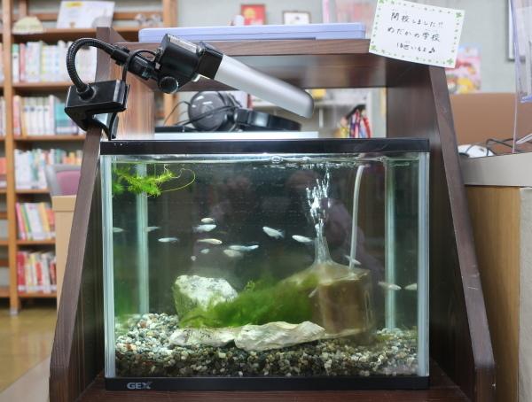 愛媛県立図書館でメダカの学校開校中!_e0197164_17534665.jpg