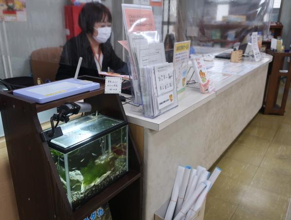 愛媛県立図書館でメダカの学校開校中!_e0197164_17541374.jpg