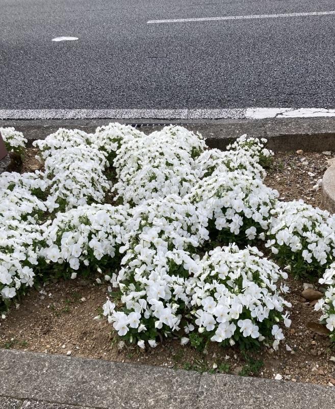 もうすぐ花見の季節_b0351169_17135413.jpeg