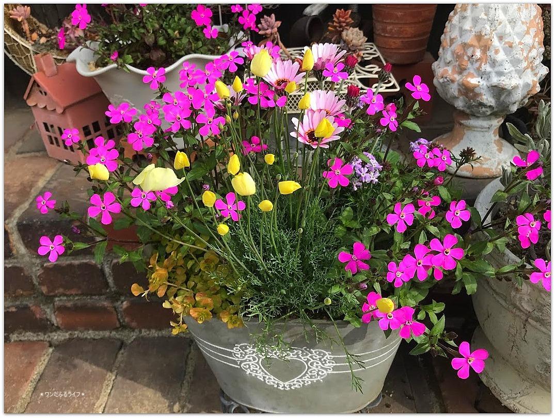 * 春色の寄せ植え *_d0317115_20535100.jpg