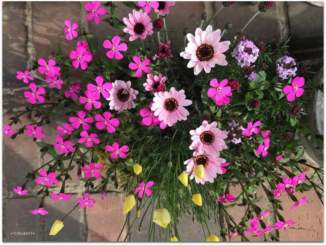 * 春色の寄せ植え *_d0317115_20540261.jpg