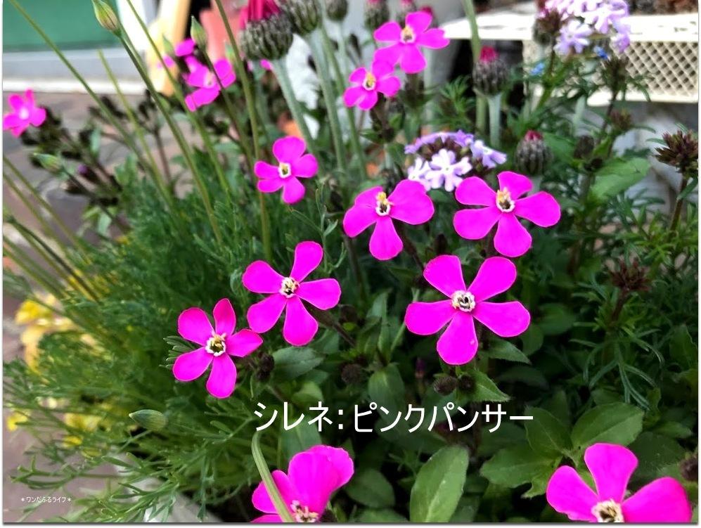 * 春色の寄せ植え *_d0317115_20541072.jpg