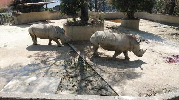 一年ぶりの動物園_f0337554_10052015.jpg