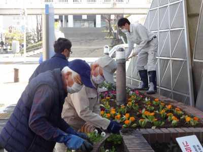 ガーデンふ頭総合案内所前花壇の植替えR3.3.15_d0338682_16470386.jpg