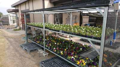 ガーデンふ頭総合案内所前花壇の植替えR3.3.15_d0338682_16484781.jpg