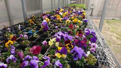 ガーデンふ頭総合案内所前花壇の植替えR3.3.15_d0338682_16485809.jpg