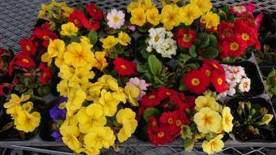 ガーデンふ頭総合案内所前花壇の植替えR3.3.15_d0338682_16500908.jpg