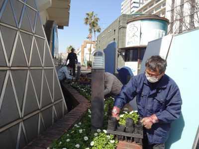 ガーデンふ頭総合案内所前花壇の植替えR3.3.15_d0338682_16512189.jpg