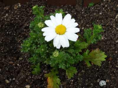 ガーデンふ頭総合案内所前花壇の植替えR3.3.15_d0338682_16572269.jpg