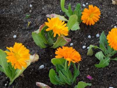 ガーデンふ頭総合案内所前花壇の植替えR3.3.15_d0338682_16573688.jpg