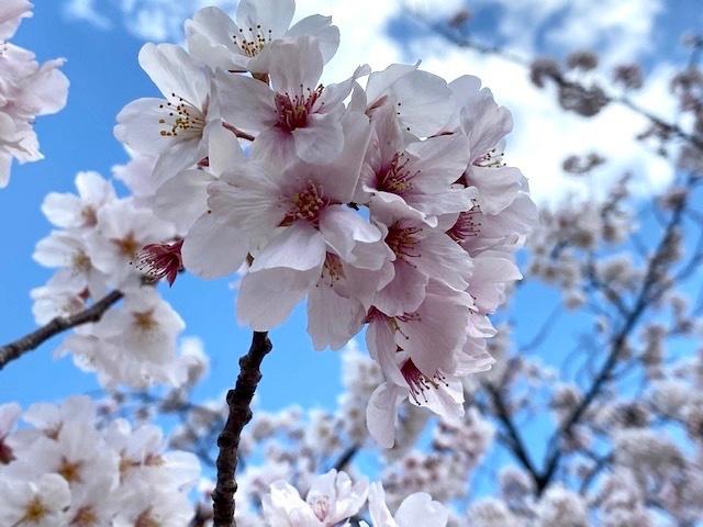 お花見は人混みを避けて…。_f0232994_11055794.jpg