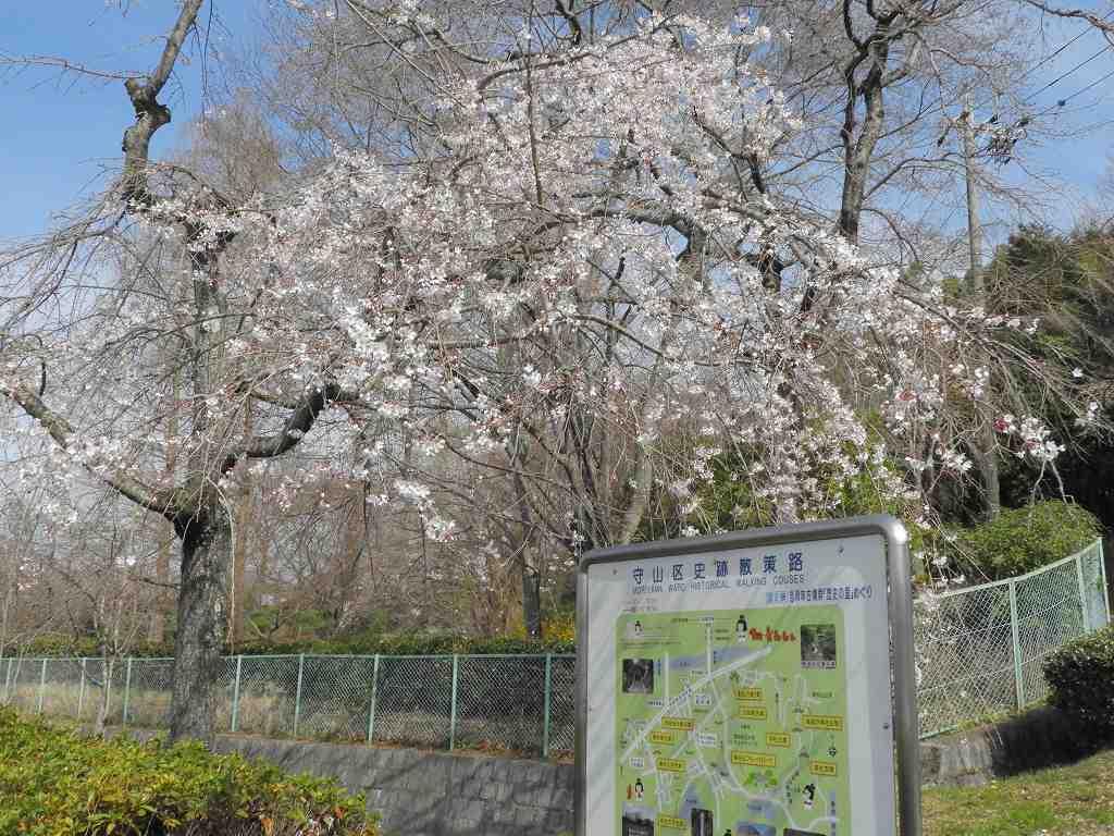 桜、色々_e0372207_11222811.jpg