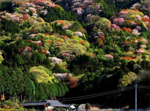 隅田川墨堤の桜風景_a0277742_22300416.jpg