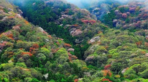 隅田川墨堤の桜風景_a0277742_22311760.jpg