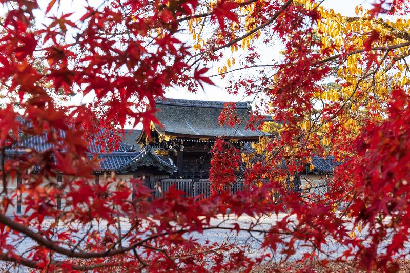 2020紅葉きらめく京都 遅い秋(京都御苑)_f0155048_22402674.jpg