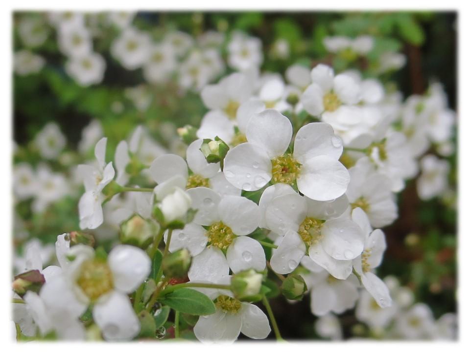 大阪でも桜が咲き始めました。_c0185858_17335745.jpg