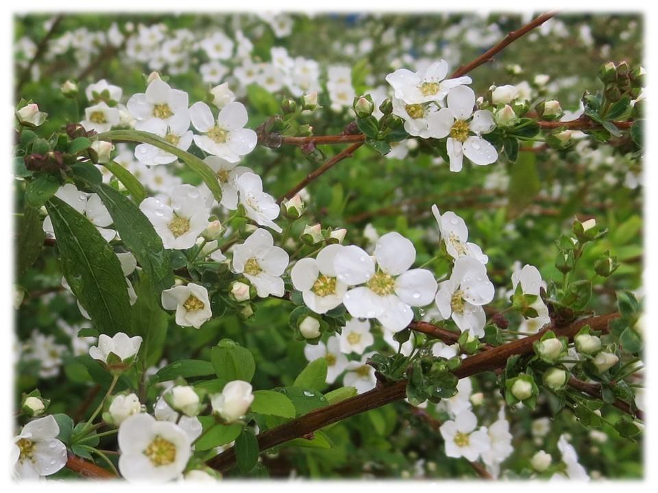 大阪でも桜が咲き始めました。_c0185858_17340252.jpg