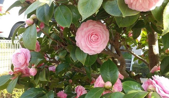 """""""下界""""は花盛り。信州の春が恋しい_f0026274_16560286.jpg"""