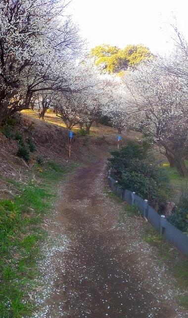 """""""下界""""は花盛り。信州の春が恋しい_f0026274_18270164.jpg"""