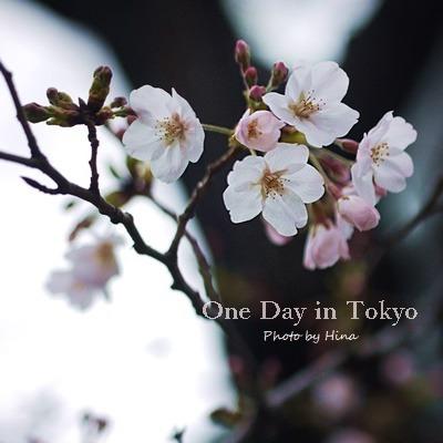 サクラサク、One Day in Tokyo_f0245680_16382148.jpg