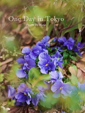 サクラサク、One Day in Tokyo_f0245680_16390965.jpg