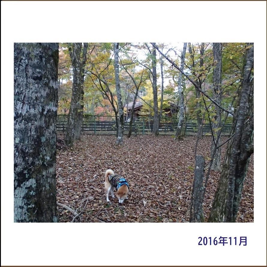 写真集『凜』_e0023790_21470278.jpg