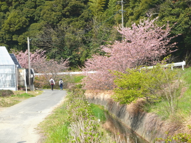 JR東海さわやかウォーキングに約13か月ぶりに参加_d0130291_15212300.jpg