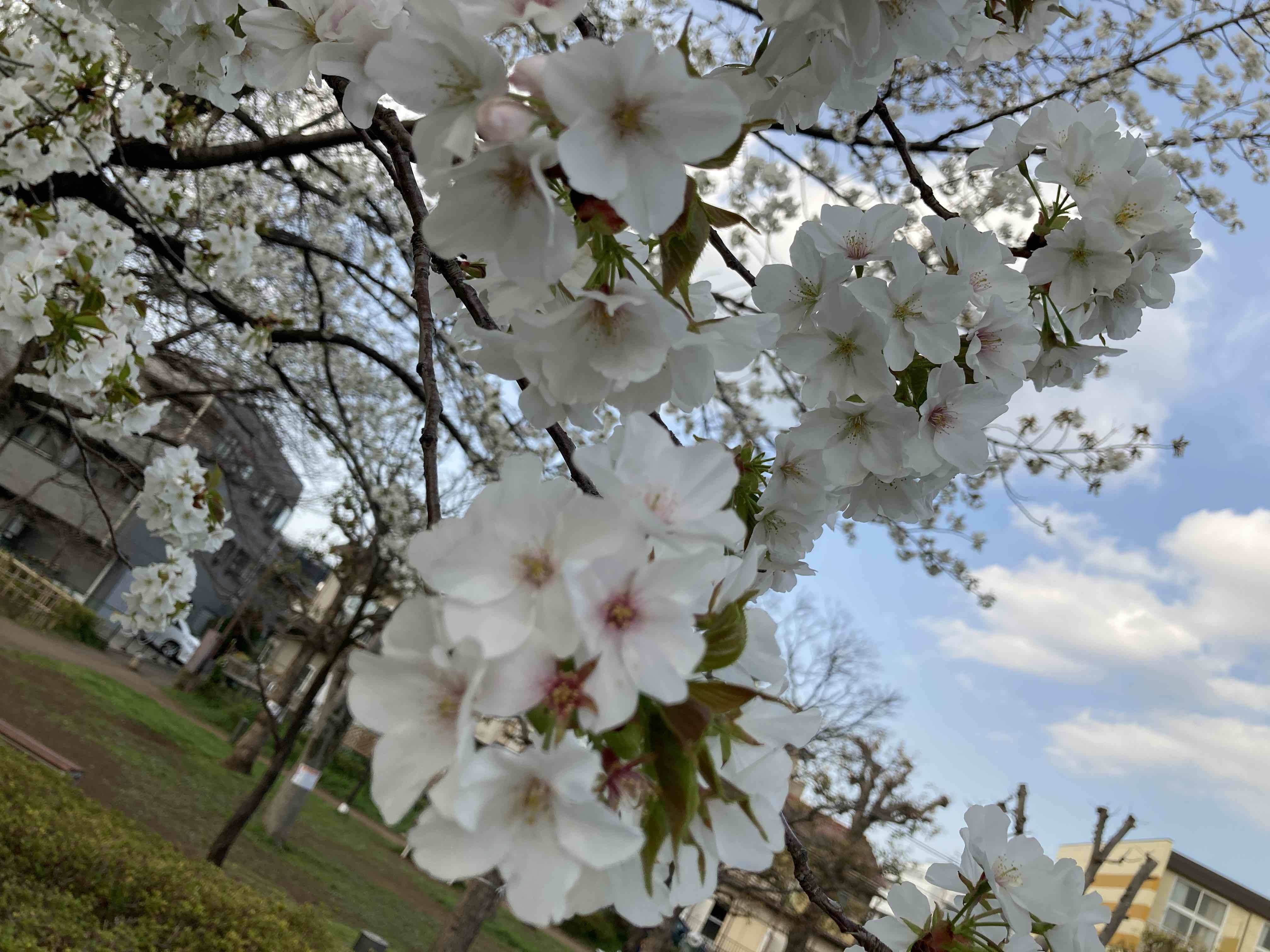 春はそこに_d0144095_21045600.jpg