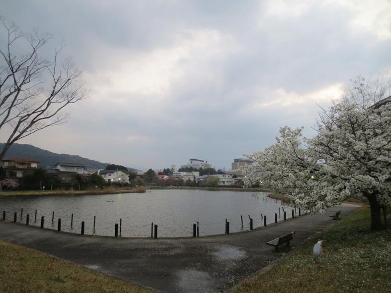 ■「今、桜はどうなってる?」ウォーキング──週替わりの夕暮れ[3/21]_d0190217_21233188.jpg