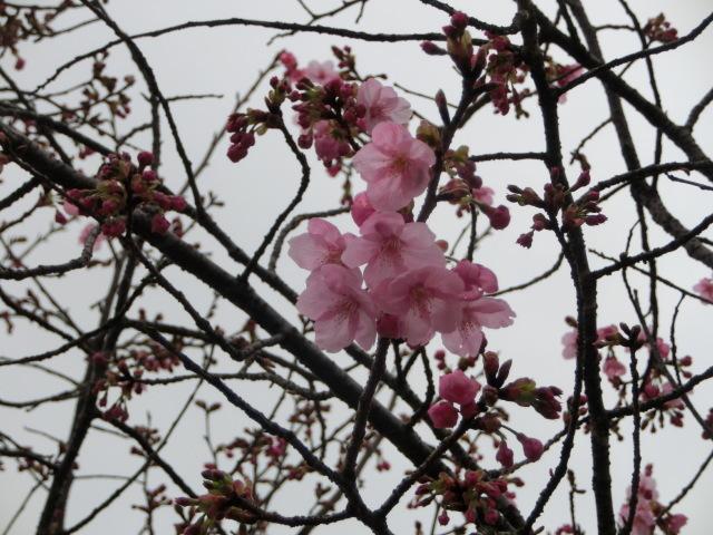 令和3年 春 彼岸_e0390829_11361211.jpg