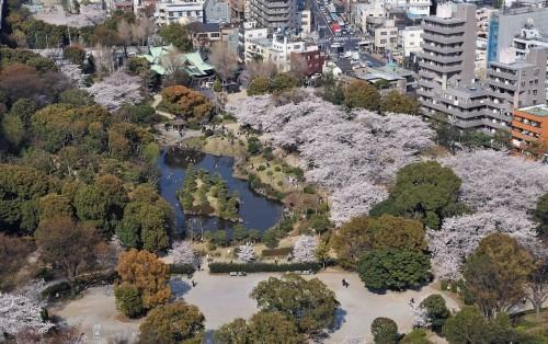 隅田川墨堤の桜風景_a0277742_08585696.jpg