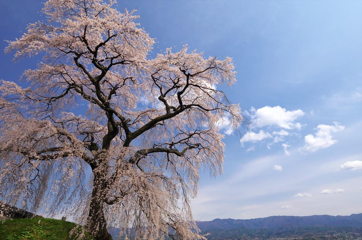 麻績の里 石塚桜_f0018464_13173842.jpg