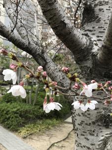 春の雨_e0113895_18425914.jpg