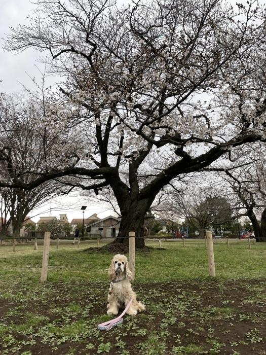 春が来たさん_b0067012_19525488.jpeg