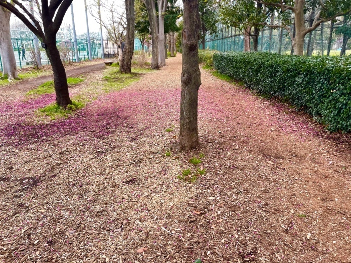 春が来たさん_b0067012_19553112.jpeg