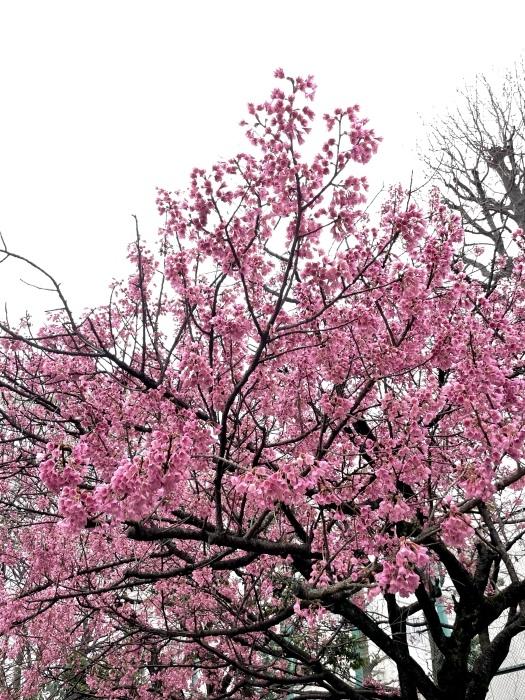 春が来たさん_b0067012_19571259.jpeg