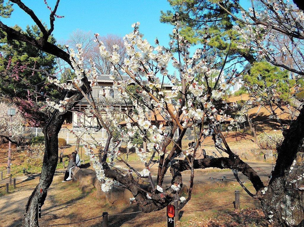 ある風景:Okurayama, Yokohama@2021 Spring #1_d0393923_22213519.jpg