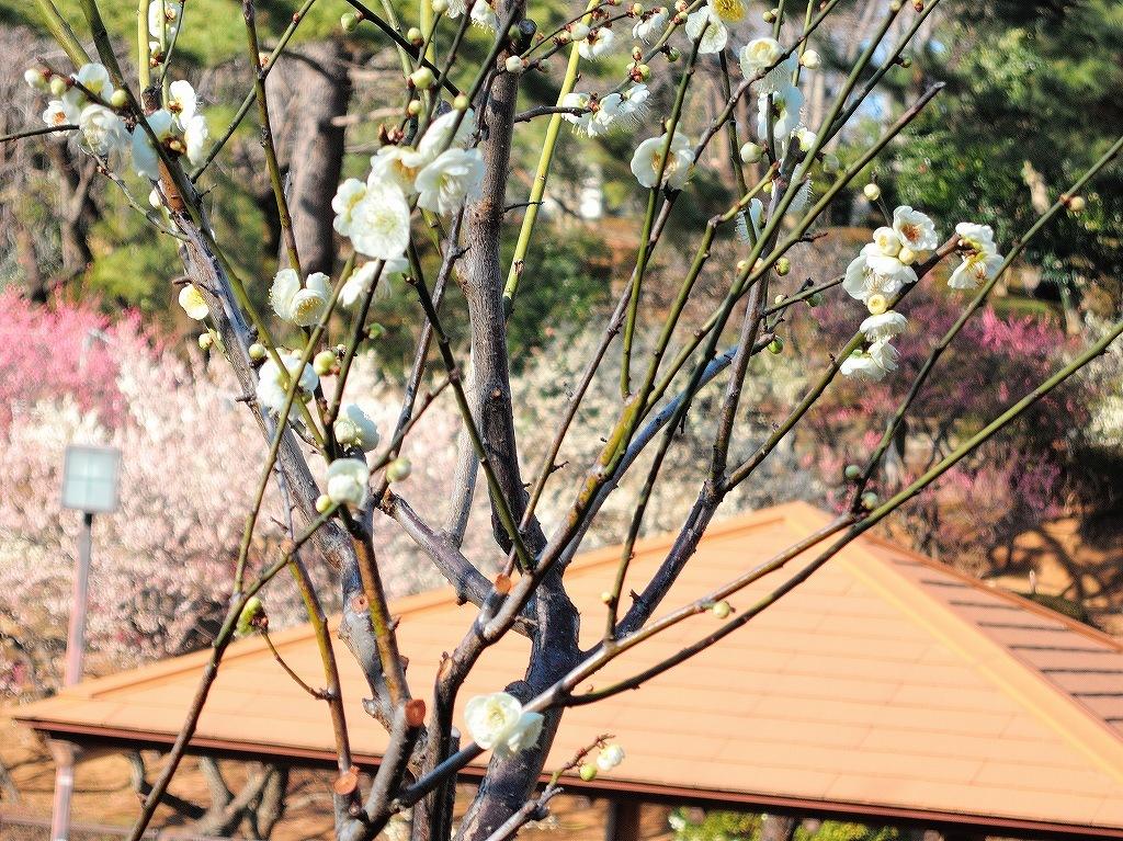 ある風景:Okurayama, Yokohama@2021 Spring #1_d0393923_22213556.jpg