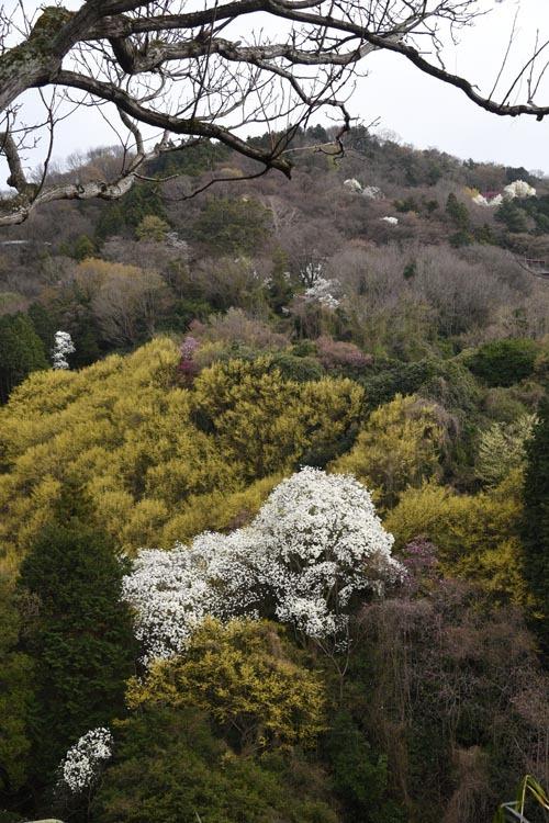 21年春の自然(22)…黄色にプラス_c0062934_19002744.jpg