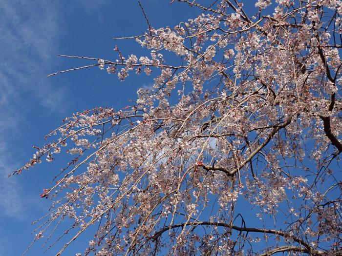 富士山に雨、桜に晴天_c0120834_19050884.jpg