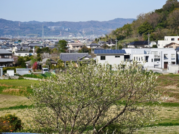 モクレン咲く丘  2021-03-24 00:00 _b0093754_23025682.jpg